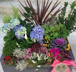 Caja de plantas variada